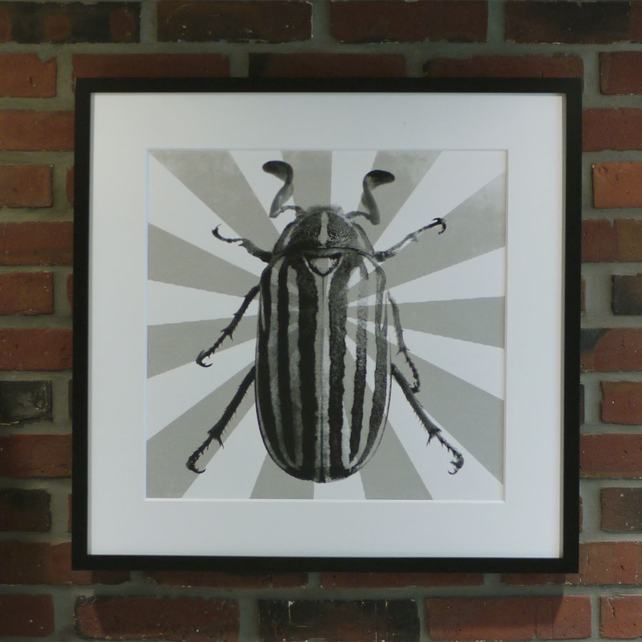 Beetle Poster Framed