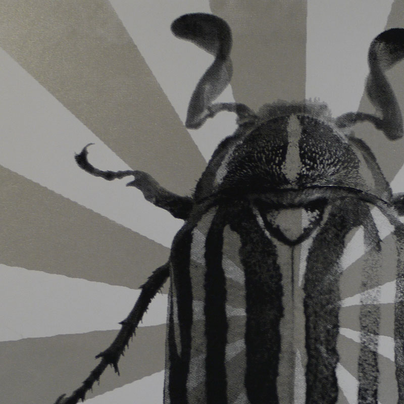 Beetle Starburst Poster Close Up